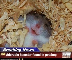 Breaking News - Adorable hamster found in petshop