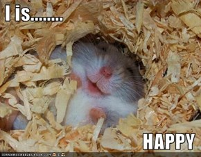 I is........                                      HAPPY