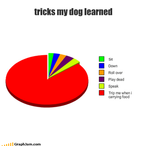 tricks my dog learned