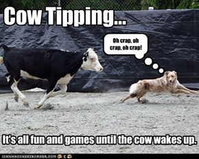 Cow Tipping...