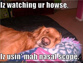 Iz watching ur howse.  Iz usin' mah nasal scope.