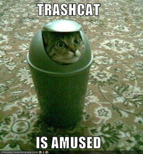 TRASHCAT  IS AMUSED