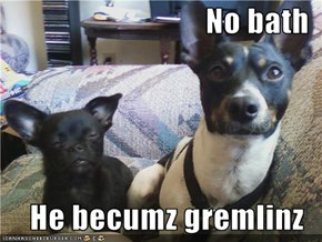 No bath  He becumz gremlinz