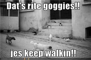 Dat's rite goggies!!  jes keep walkin!!