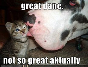 great dane.  not so great aktually