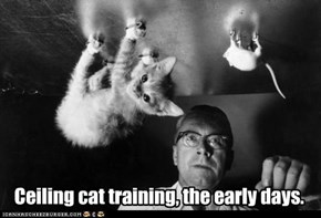 Ceiling cat training, the early days.