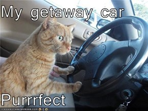 My getaway car  Purrrfect