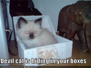 Devil cat is hiding in your boxes