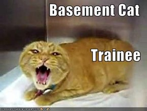 Basement Cat Trainee