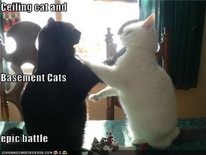 Ceiling cat and Basement Cats epic battle
