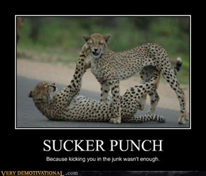 Cheetahs Fight Dirty