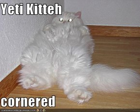 Yeti Kitteh  cornered