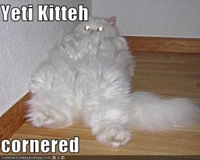 Yeti Kitteh  cornered