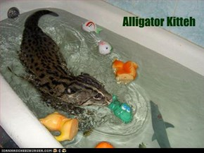 Alligator Kitteh
