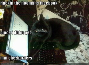 Hackin the hoomans facebook since i didnt get  mai chezburgers