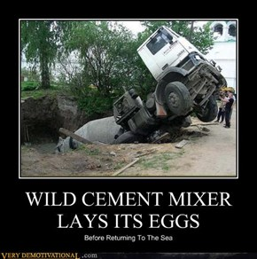 WILD CEMENT MIXER LAYS ITS EGGS