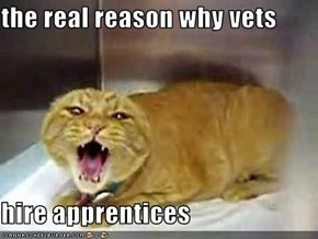 the real reason why vets  hire apprentices