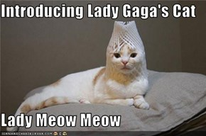 Introducing Lady Gaga's Cat  Lady Meow Meow