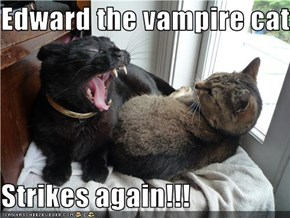 Edward the vampire cat  Strikes again!!!