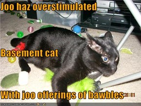 Joo haz overstimulated Basement cat With joo offerings of bawbles