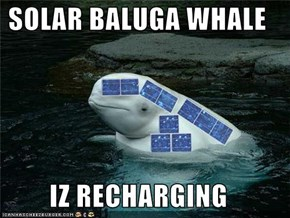 SOLAR BALUGA WHALE  IZ RECHARGING