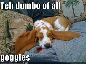 Teh dumbo of all  goggies