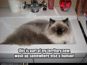 this is part of my territory now,  wash up somewhere else u human!