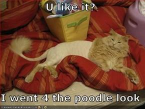 U like it?  I went 4 the poodle look