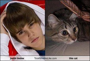 justin bieber Totally Looks Like this cat