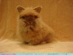 Cat...No Bunny....No Guinea Pig...