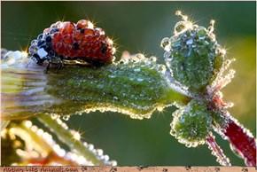 Bedazzle Bug