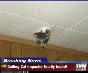 Breaking News - Ceiling Cat imposter finally found!
