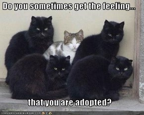 Do you sometimes get the feeling...  that you are adopted?