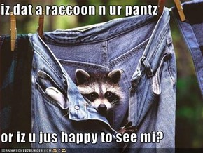 iz dat a raccoon n ur pantz  or iz u jus happy to see mi?