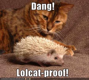 Dang!  Lolcat-proof!