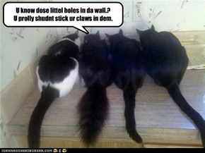 U know dose littel holes in da wall.?   U prolly shudnt stick ur claws in dem.