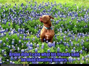 Bruno didn't care what his friends said,  he liked smelling flowers.