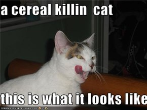 a cereal killin  cat   this is what it looks like