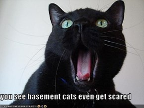 you see basement cats even get scared