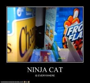 NINJA CAT