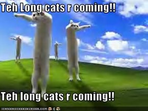 Teh Long cats r coming!!  Teh long cats r coming!!