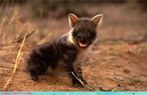 This Hyena Thinks You are Hilarious