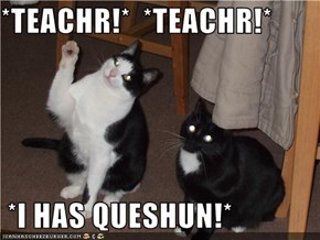 *TEACHR!*  *TEACHR!*    *I HAS QUESHUN!*
