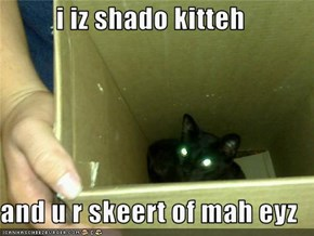 i iz shado kitteh  and u r skeert of mah eyz