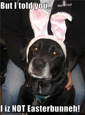 But I told you...  I iz NOT Easterbunneh!