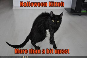 Halloween Kitteh  More than a bit upset