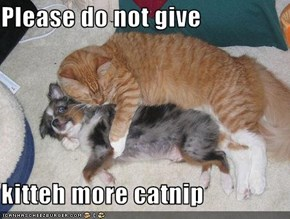 Please do not give  kitteh more catnip