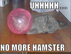 UHHHHH.....  NO MORE HAMSTER