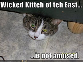 Wicked Kitteh of teh East...  ...iz not amused.
