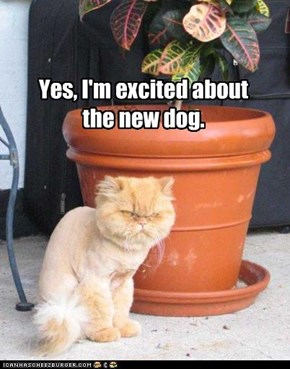Yes, I'm excited about the new dog.